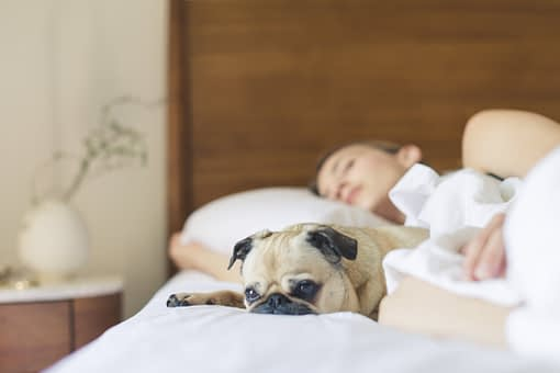 Sova med hund/katt